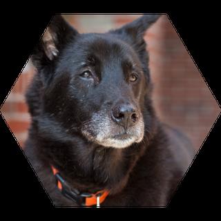 Lenny Dog | Sales & Marketing Technology Consultants